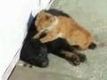 Do gato com amor...