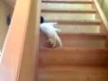 Gato escorregadio