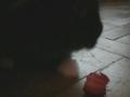 Snoopy e o morango