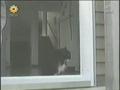 Gatos e portas de vidro