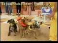 Cães: Saltar à corda