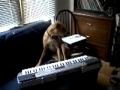 Concerto canino