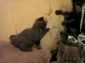 Árvore de Natal e gatinhos