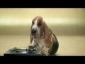 Basset Rapper: ritmo hilariante