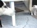 O jogo do cão e do gato
