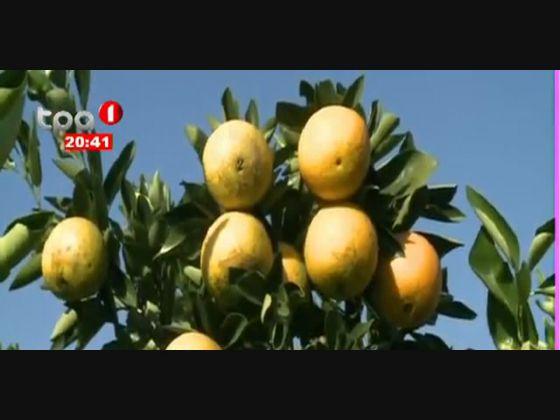 5 hectares de Laranja e Tangerina cultivados no Cuando Cubango
