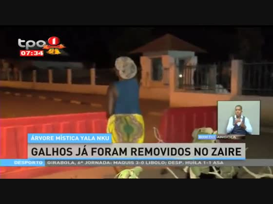 Árvore mística Yala Nku - Galhos já foram removidos no Zaire